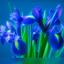bloemen.....................