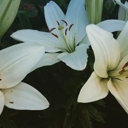 flowers l