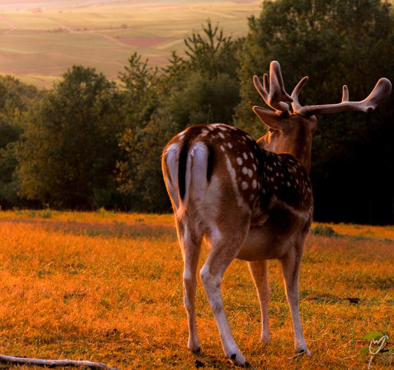 alle zoogdieren houden van een mooie zonsondergang - Niet 100%stilstaand model,maar net genoeg om m goed te vangen. Blijkbaar geniet hij net zo veel a