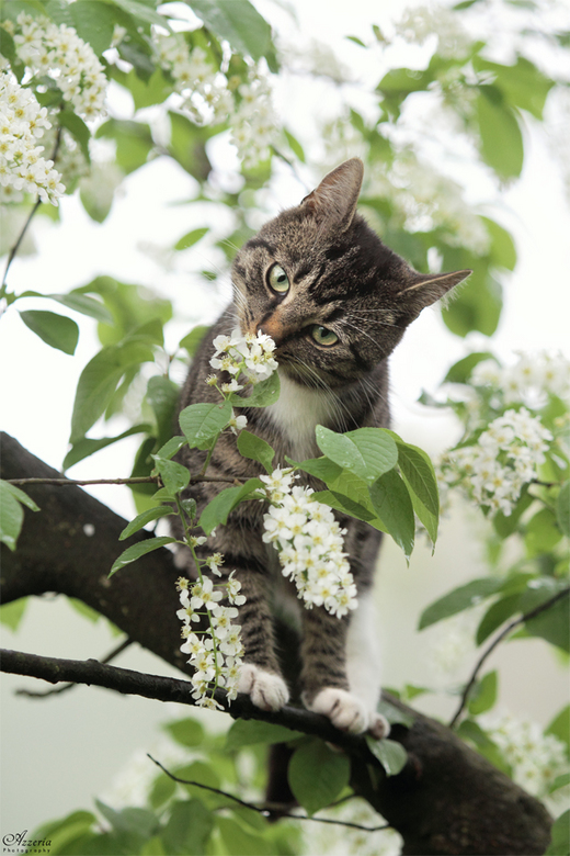 Sniff - We all love the spring!