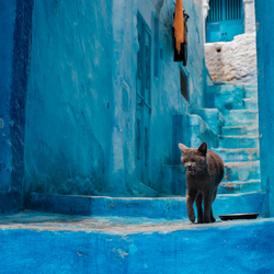 Mooie bewoner in de blauwe medina