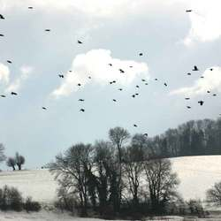Roeken vluchten voor de koude