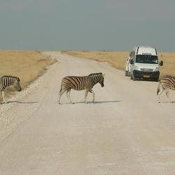 Zebrapad, Etosha National Park, Namibia