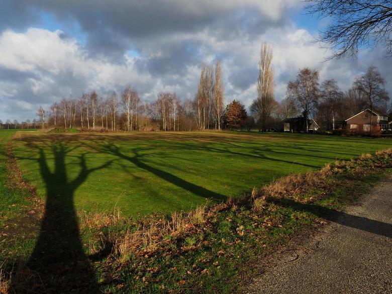 spelen met zonlicht - Al wandelend door de achterhoek, met het zonlicht achter je, krijg je leuke effecten..