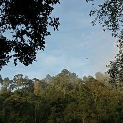 Primair oerwoud