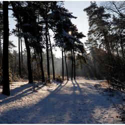 Winters landschap op de Brussumerheide