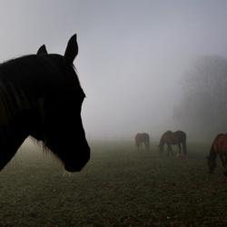 baikes in bingelrader mist