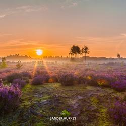 Sunrise above the purple heather