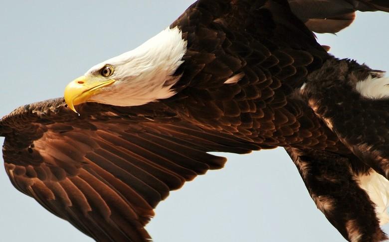 In vogelvlucht -