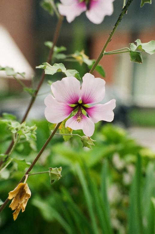 bloem close up - close up van een bloem,<br /> <br /> gemaakt met een Konica Minolta Dynax 505si<br /> <br /> aight