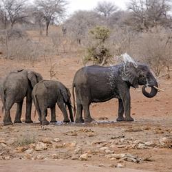 Zuid-Afrika 185