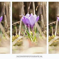 Fotocollage - Het echte lentegevoel