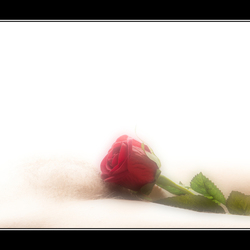 Ik geef je een roosje