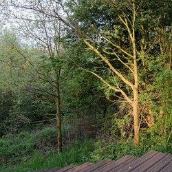 Moerputten - ochtendlicht