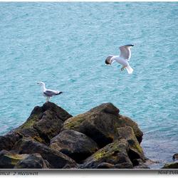 Playa Blanca 2 meeuwen