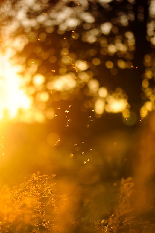 Dancing when the sun goes down. - Dansende muggen in het avondzonnetje.<br /> <br /> Bedankt voor jullie reacties op Z E N.