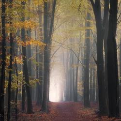 Autumn's Mystery.