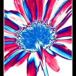 Psychedelische bloem 2