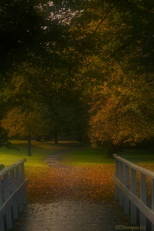 Lead the way - Als de bladeren van de bomen beginnen te vallen ontstaan er mooie okerkleurige tapijten. <br /> <br /> Iedereen bedankt voor de fijne