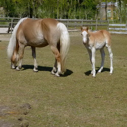 Dieren serie 163. Veulen met paard.