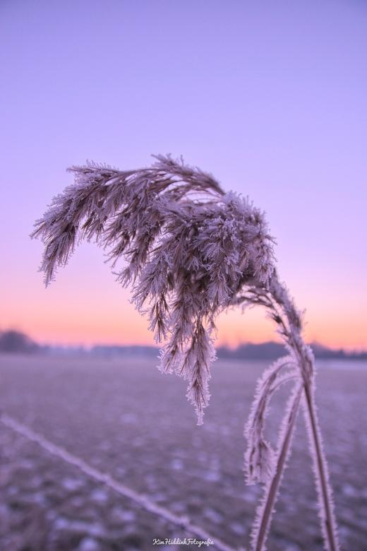 Winter van dichtbij