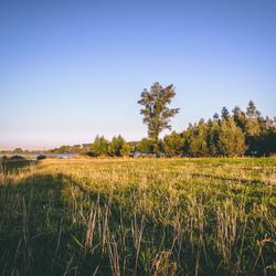 Veld in de Biesbosch