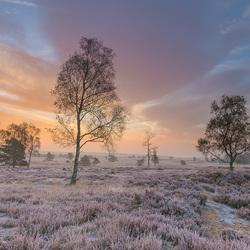 Een fraaie ochtend op de Veluwe