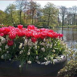 tulpen en zo