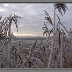 Bewerking: Winter