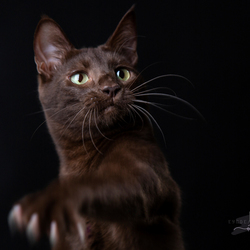 CAT(CH) ME!