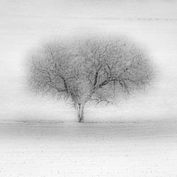 Een boom in een veld
