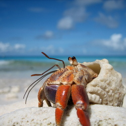 Heremietkreeft op Klein Curaçao