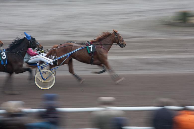 horse in action - experiment met trage sluitersnelheid