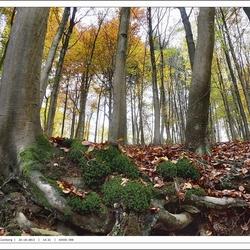 Van onderen......Herfstbomen