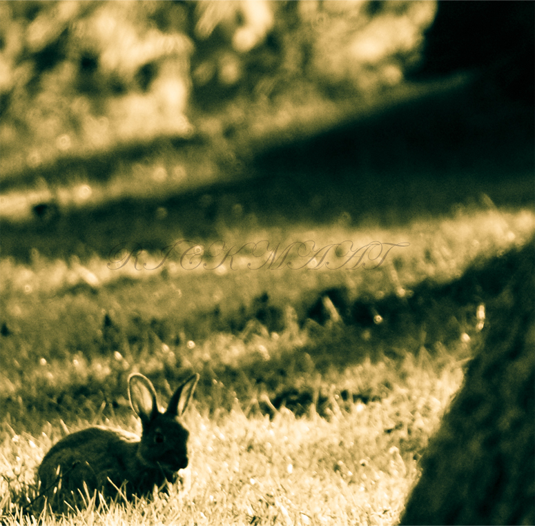 Rabbit - Een haasje in de zon.