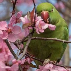 Dag bloesembomen