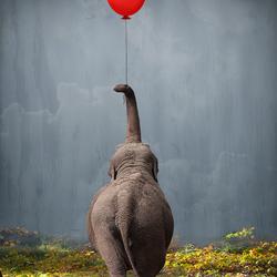 De lieve olifant met z'n rode ballon