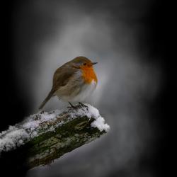 Wachten op de winter.