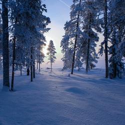 Lapland wintertime