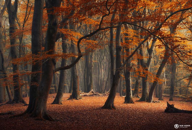 Over the hill - Herfst in het speulderbos