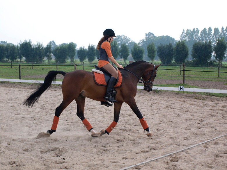 Gestrekte draf - Clinic paardrijdrijden
