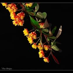 lentelicht
