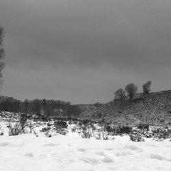 Zwarte winter