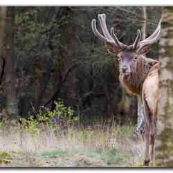 Dutch wildlife