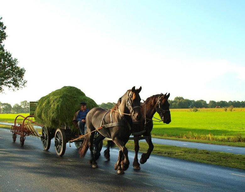 Folklore - Foto van de boerenoptocht onderdeel van het Flaeijelfeest te Oude-Nieuwehorne.