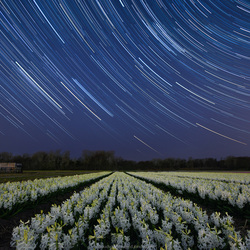 Flower field under a sky full of stars
