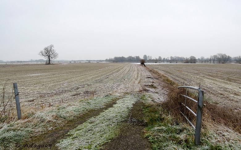 Winterland -