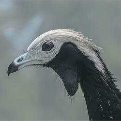 vogel 20
