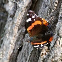 Vlinder (1)-2
