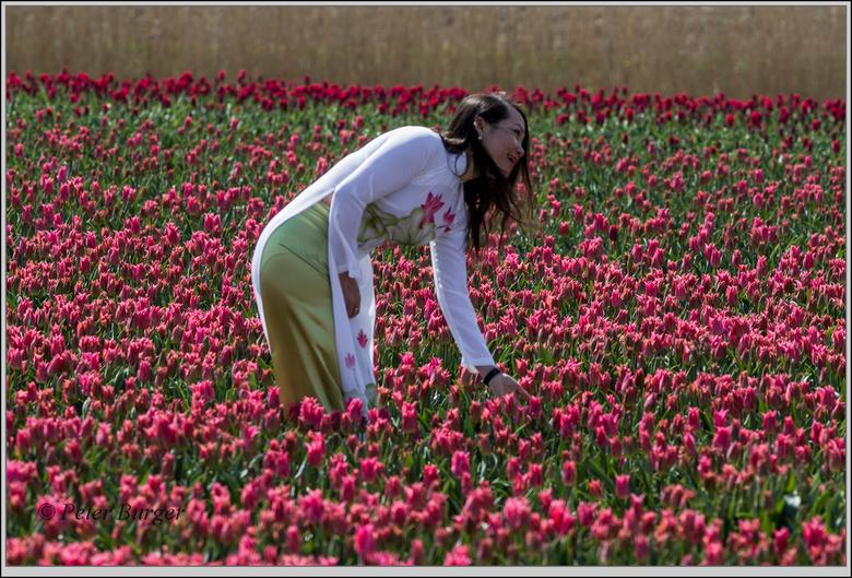niet betreden deeltje 2 - niet tussen de bloemen lopen ..... en het plukken van de bloemen is natuurlijk geheel uit den boze